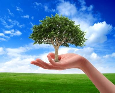 Árbol sostenido sobre mano